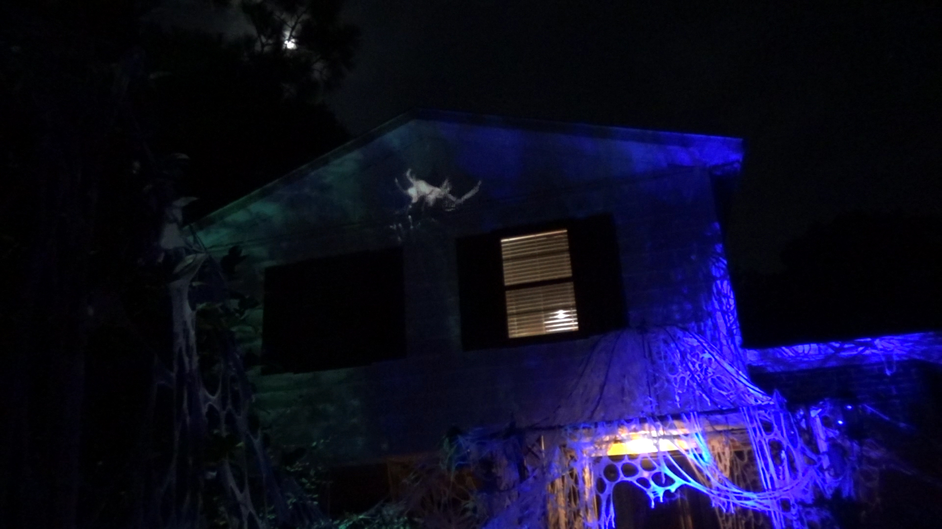 spider projection1